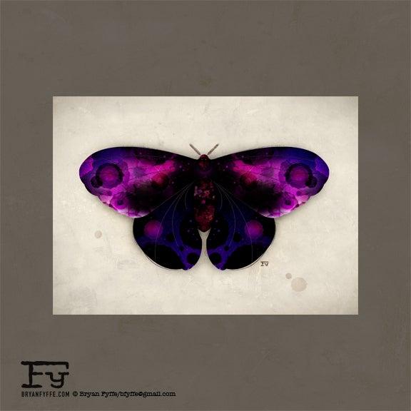 Image of Butterflies & Moths