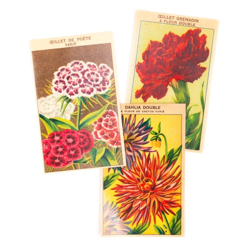 Image of 1920's French Flower Seed Labels - Set of 6
