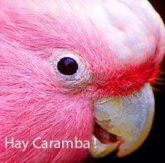 Image of JUANITA pompom parrot