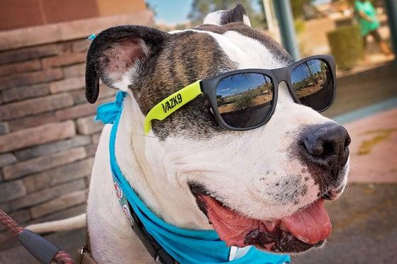 Image of AZK9 Sunglasses