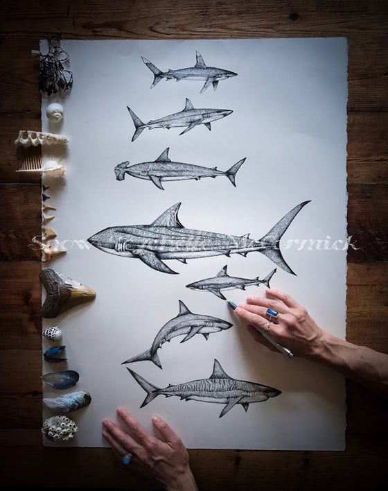 Image of Shiver of Sharks ~ Archival Print