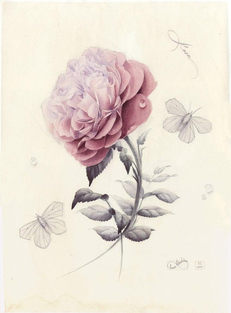 Image of Wtercolour Rose. Original