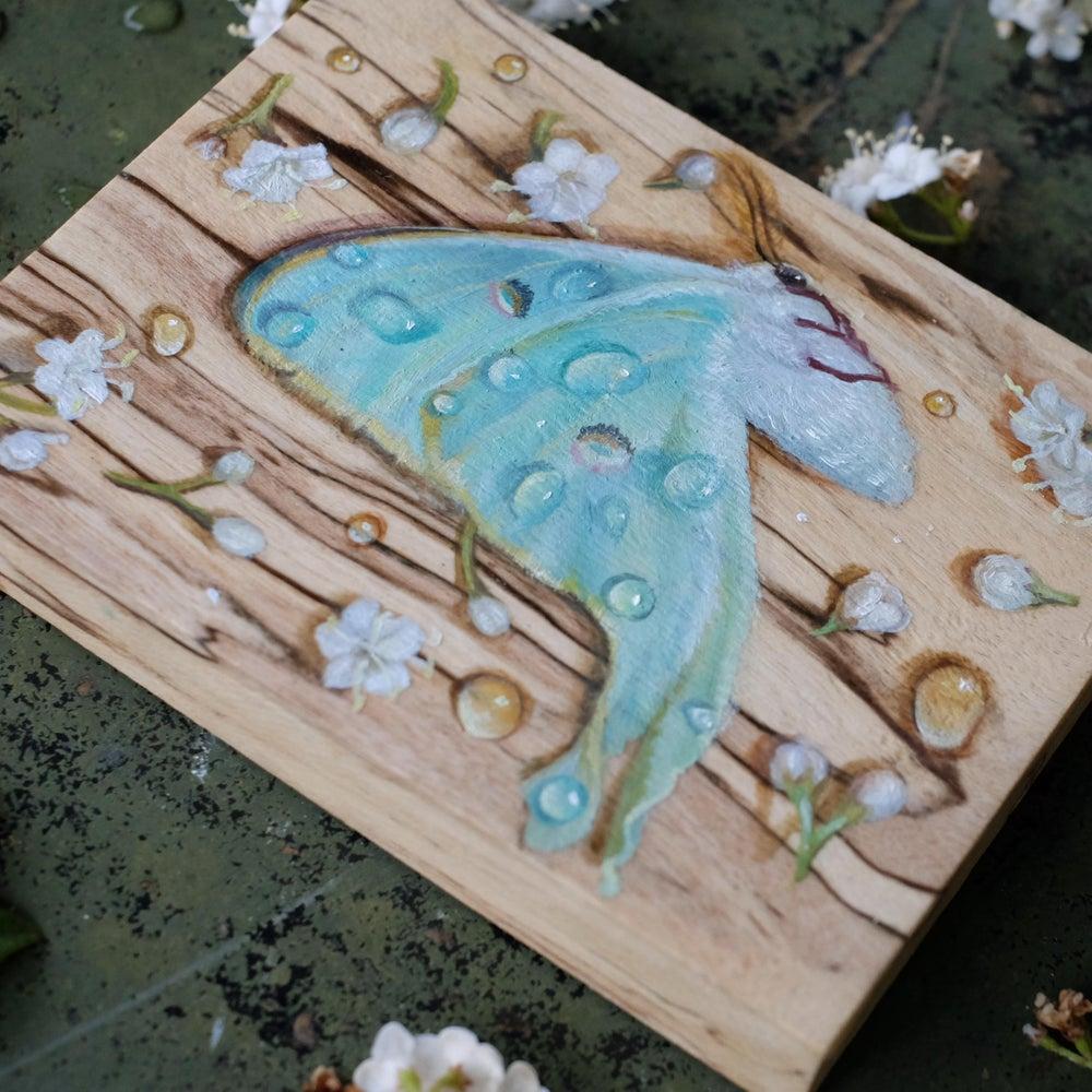 Image of Luna Moth #1 original painting