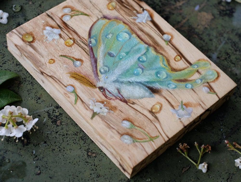 Image of Luna Moth #2 original painting