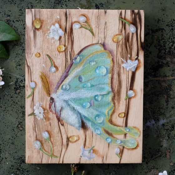 Image of Luna Moth #2 original painting