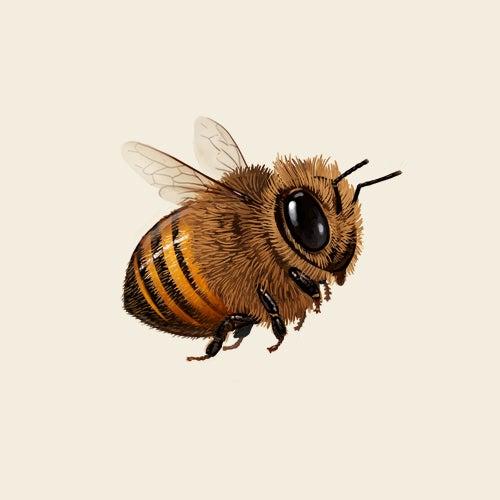 Image of Honey Bee