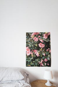 Image of Camelia (full colour) A1 poster