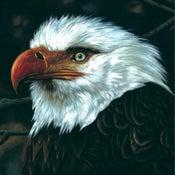 Image of MOGWAI the hawk is howling 2xLP
