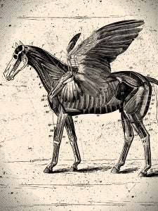 Image of Anatomical Pegasus