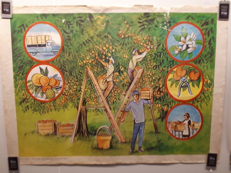 Image of Orchard Poster