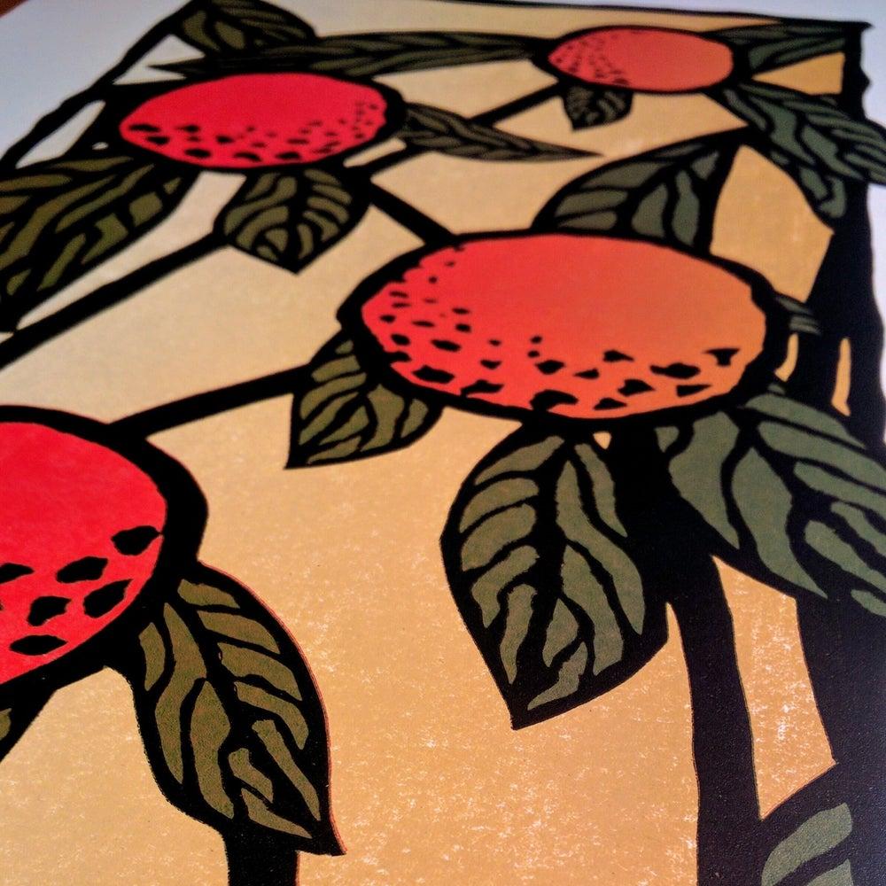 Image of Orange Sunshine
