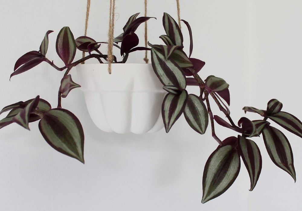 Image of Jelly mould porcelain hanging planter