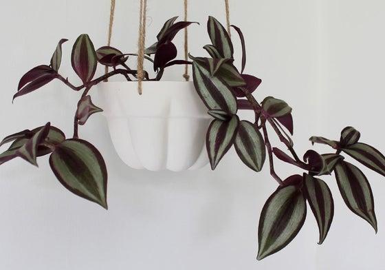 Image of Jelly mould porcelain hanging planter