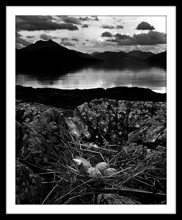 Image of SP07-Gull's Nest, Midsummer Eve,
