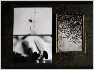Image of 5x7 prints, single