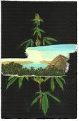 Image of Weed + Landscape