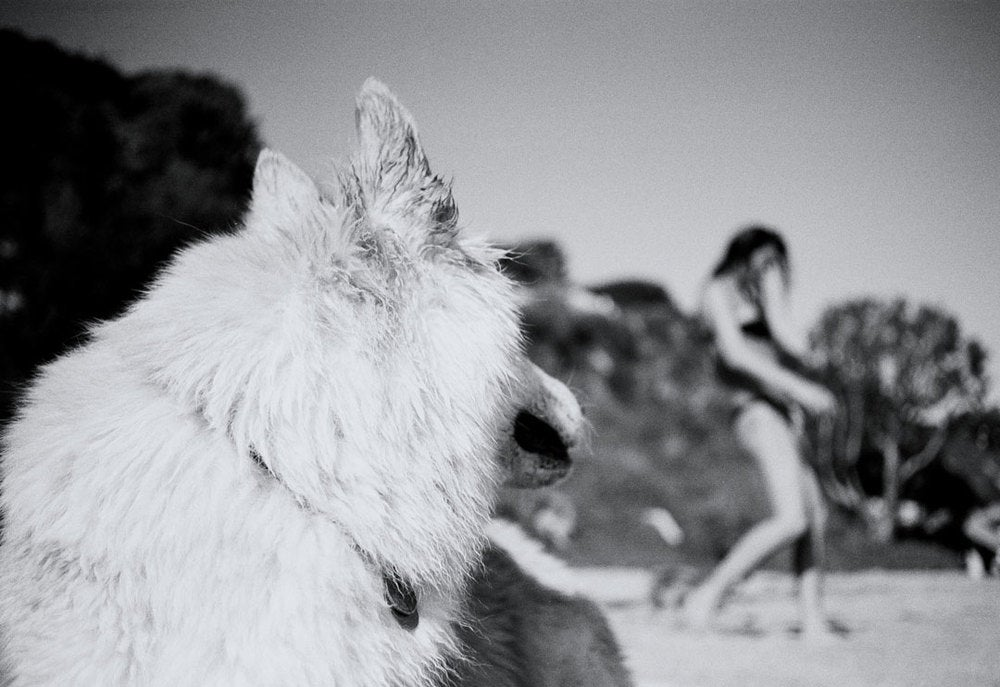 "Image of ""Animal Attraction"" by Maximillian Chow"