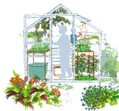 Image of Autumn greenhouse