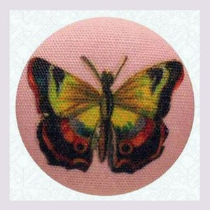 Image of Papillon épinglé
