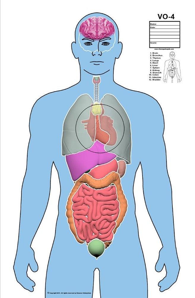 Vital Organ Targets — Deluxe Vital Organ Target