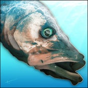Image of Snook | FishEyez