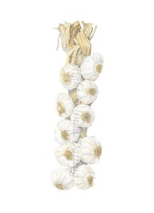 Image of Garlic String Limited Edition Print. 2012 Entry in the Royal Watercolour Society Competition.