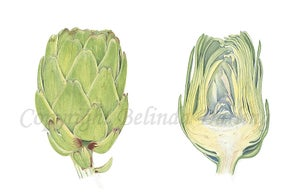 Image of Artichoke Limited Edition Print. 2012 Entry to Royal Watercolour Society Competition.