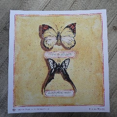 Image of Butterfly Print no.2