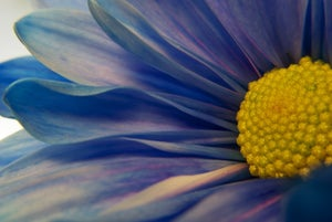 Image of Macro Blue