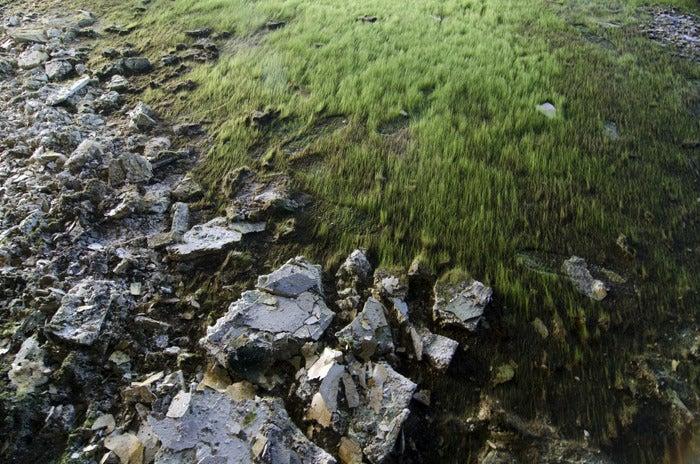 Image of Moss