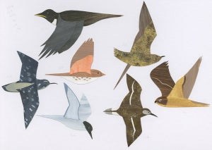 Image of Endangered Birds No.1 - Hurry only 1 left!