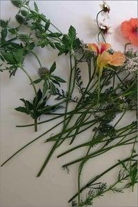 Image of Backyard Wildflowers Book