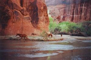 Image of Canyon Horses