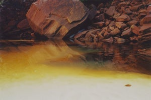 Image of Yellow Zion