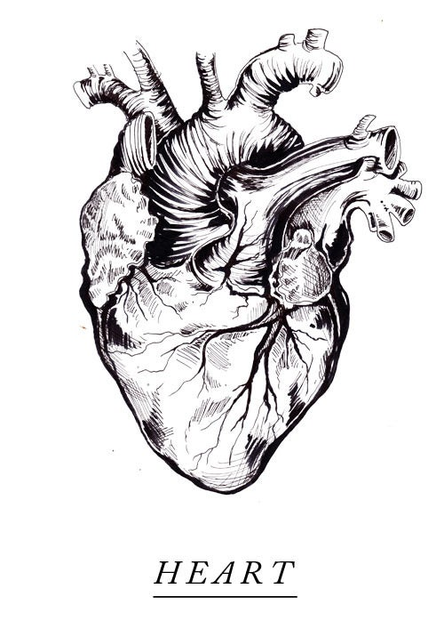 Image of heart