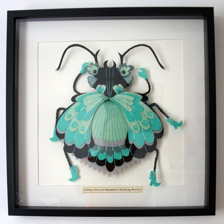 Image of Crimp Frilled Kayamori Kicking Beetle (Extra Large size)