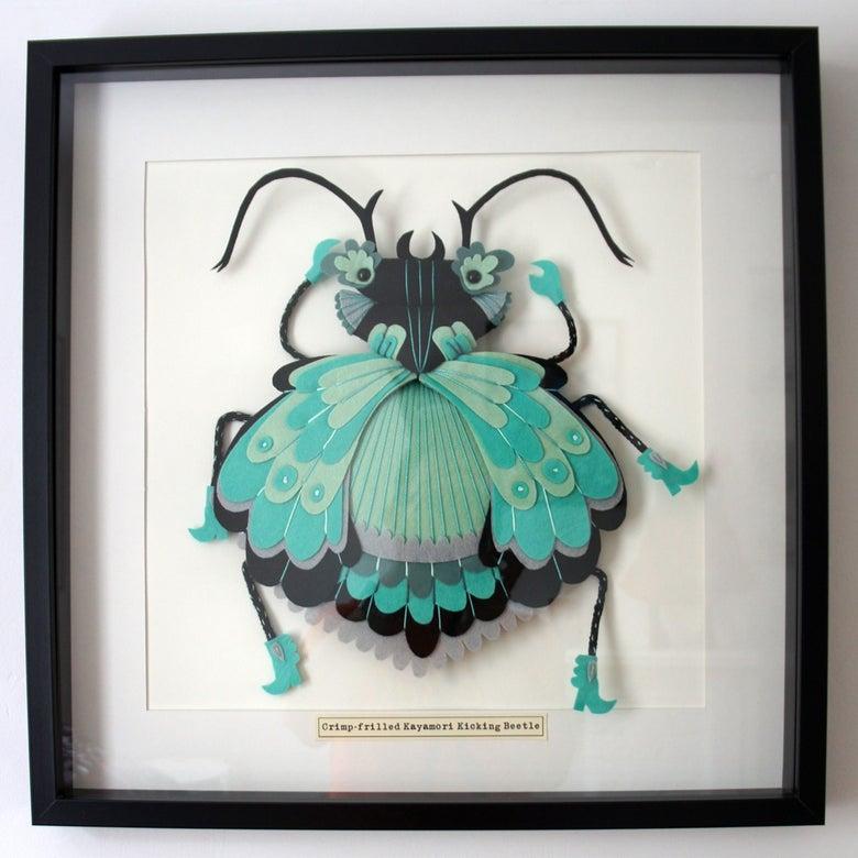 Image of Crimp Frilled Kayamori Kicking Beetle (Extra Large size)