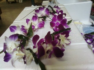 Image of Single Tropical Twist- Tuberose, Orchid and Ti-Leaf