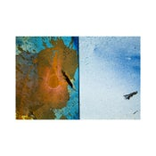 Image of CY DUNE - Where the Wild Things Diptych #2 (Blue, Orange, White)