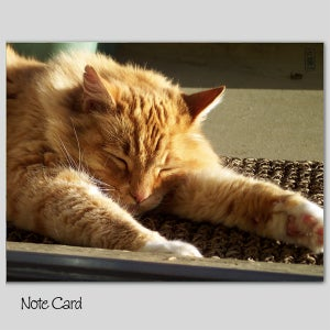 Image of Set of 3 Note Cards, Muddy Note Card #1