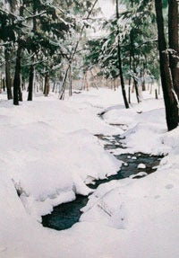 Image of Frost Valley Notecard