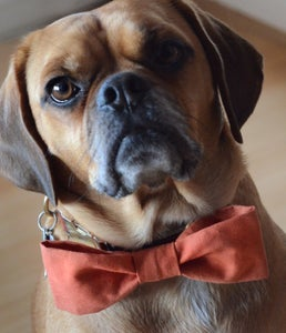 Image of Dog Bow Tie || Sewing Tutorial