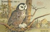 Image of Boraxine - Brown Owl