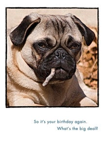 Image of Dog Years Birthday