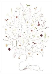 Image of August Tree / Augustiträd