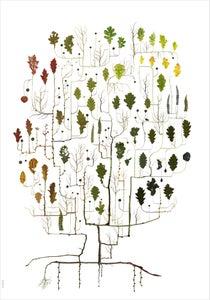 Image of Oak Tree / Eken