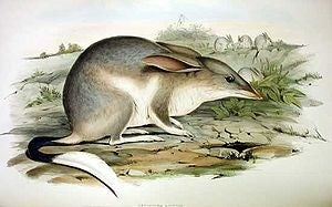 Easter Bilby Records
