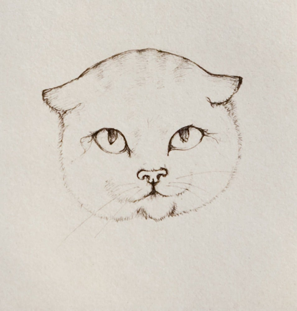 Image of Le Chat