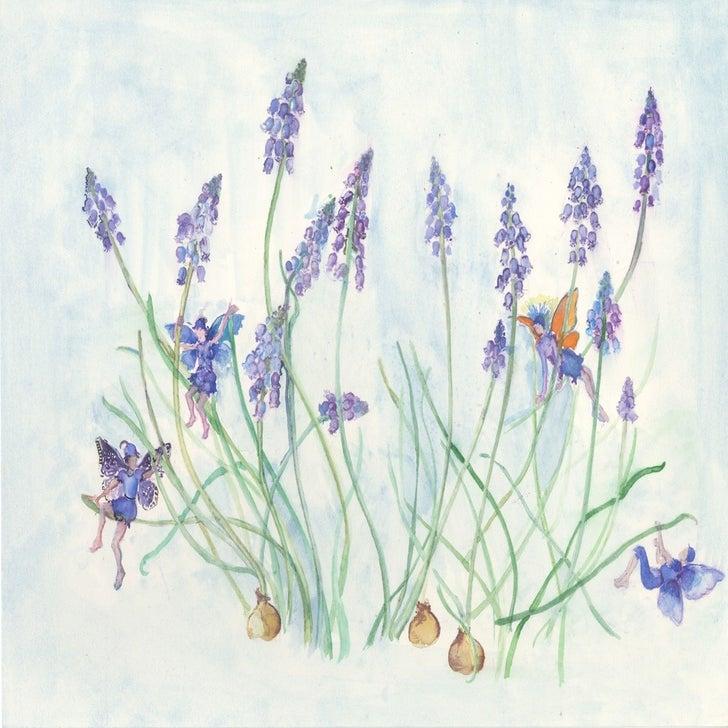 Snowdrop Flower Fairy Flower Fairies Print