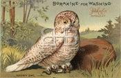 Image of Boraxine - Snowy Owl
